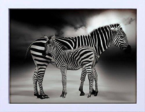 Quadro em Animais Zebras Decore Pronto Preto/ Branco 44x34cm